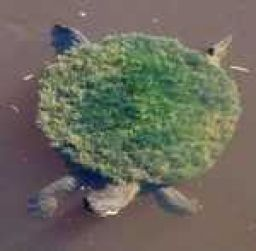 A'Tuin is real