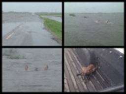 It Rained 8 Inches In Southern Saskatchewan And These Guys Saved Drowning Foxes