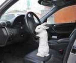 Just get in the car , Alice. I'll explain on the way...