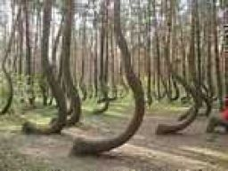 Mysterious Photos Of Unexplainably 'Crooked Forest' In Poland