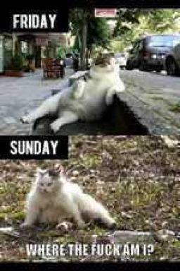 Sums up my weekends