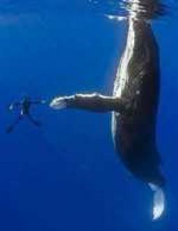 Whale high fiving a diver