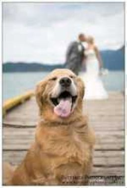 When your dog thinks the wedding photoshoot is for him
